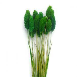 Plante Uscate Floare de Mei, Verde Deschis 100gr