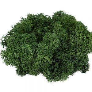 Muschi sau Alge stabilizate de Islanda, Verde inchis, 250gr