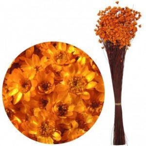 Plante Uscate GLIXIA Portocaliu, 50 gr