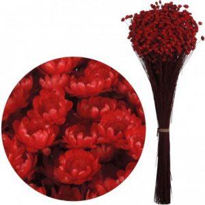 Plante Uscate GLIXIA Rosie, 50 gr