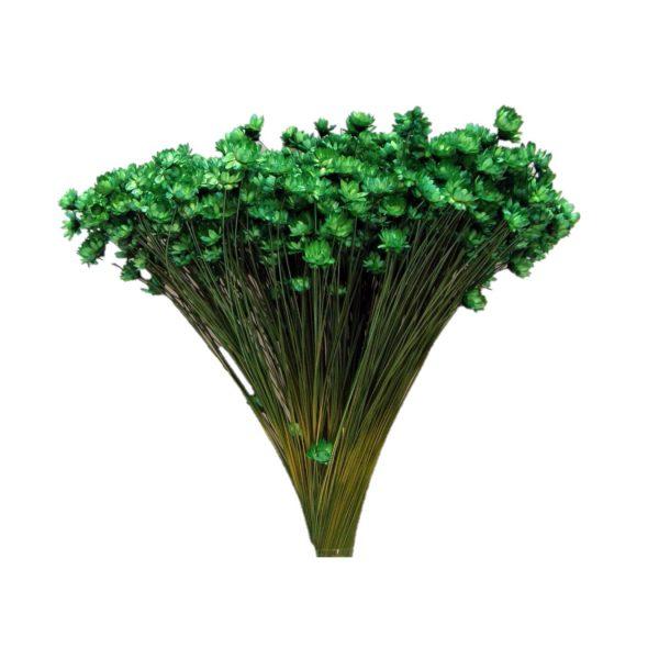 Plante Uscate GLIXIA Verde, 50 gr