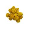 1078 Capete uscate MING Ranunculus 4cm galben