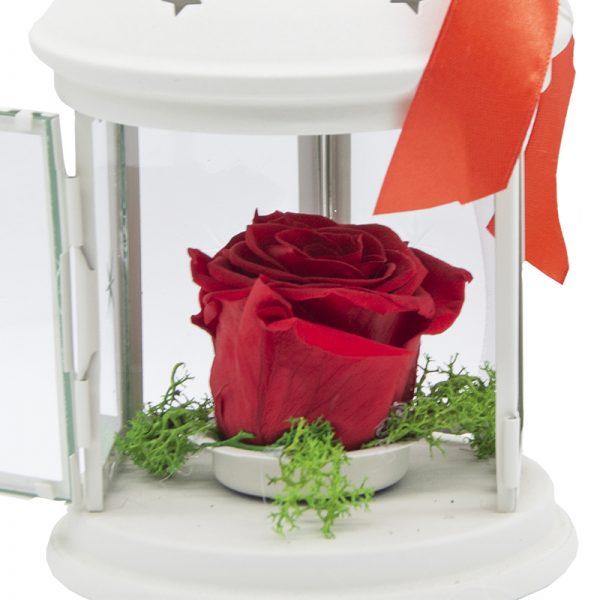 Felinar cu trandafir criogenat rosu