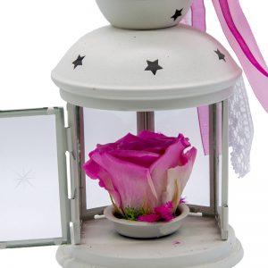 Felinar cu trandafir criogenat roz