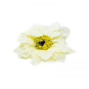 Flori capete diverse alb galbui