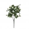 Frunze eucalipt