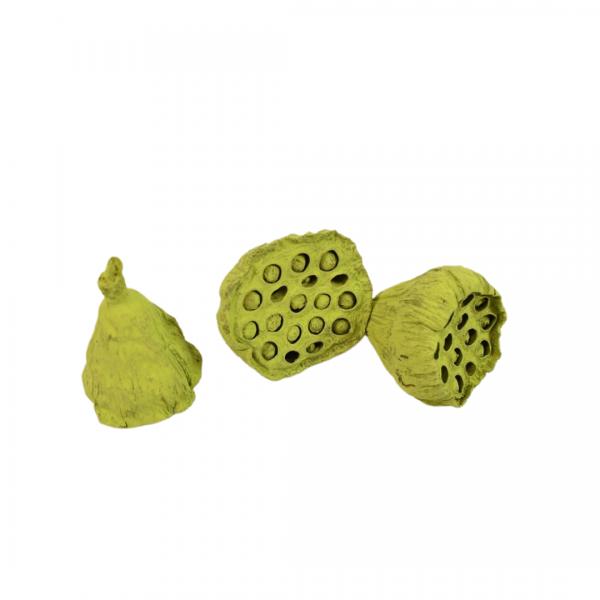Lotus Mic 4-6cm Verde Olive