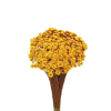 Plante Uscate GLIXIA Galben, 50 gr