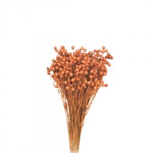 Plante Uscate LEN, Portocaliu 100gr