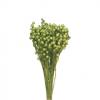 Plante Uscate LEN, Verde Deschis 100gr