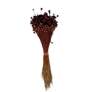 Plante Uscate GLIXIA Maro, 50 gr