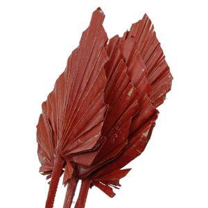 Frunze palmier mediu ceruit rosu