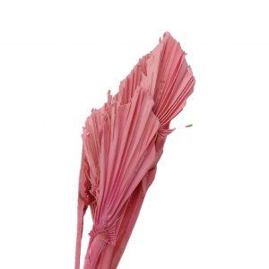 Frunze palmier mini alb-roz