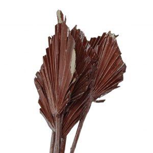 Frunze palmier mini ceruit maro