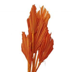 Frunze palmier mini portocaliu