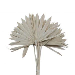 Frunze palmier soare albit