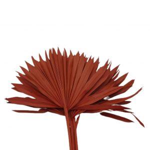 Frunze palmier soare portocaliu