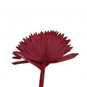 Frunze palmier soare rosu